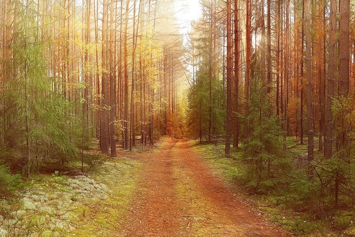 Utilizar biomasa como productor de energía