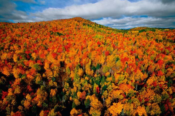 Bosque otoñal en Canadá
