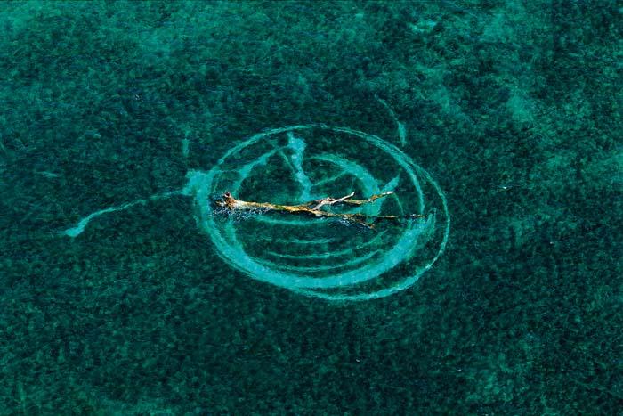 Tronco de árbol en el mar de coral