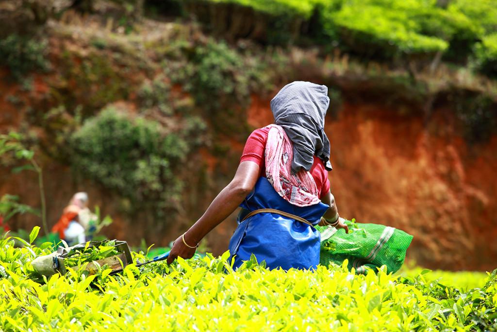 Asegurar las cosechas y proteger los trabajadores del campo