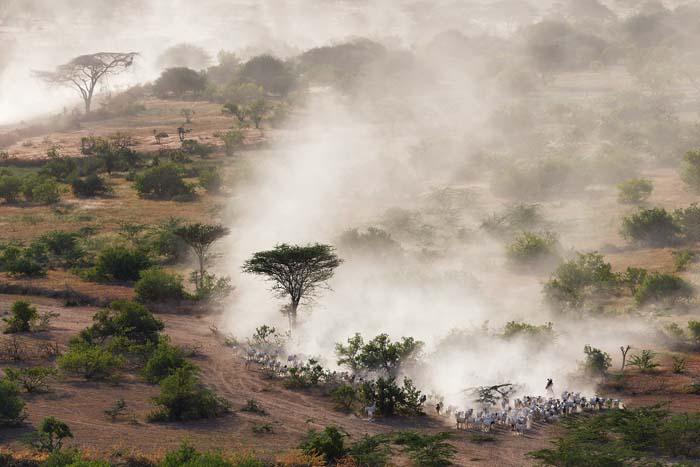 Ganadería nómada en Kenia